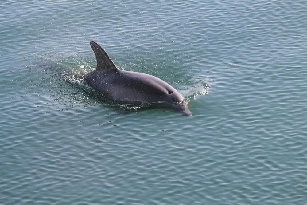 documentation sur les dauphins